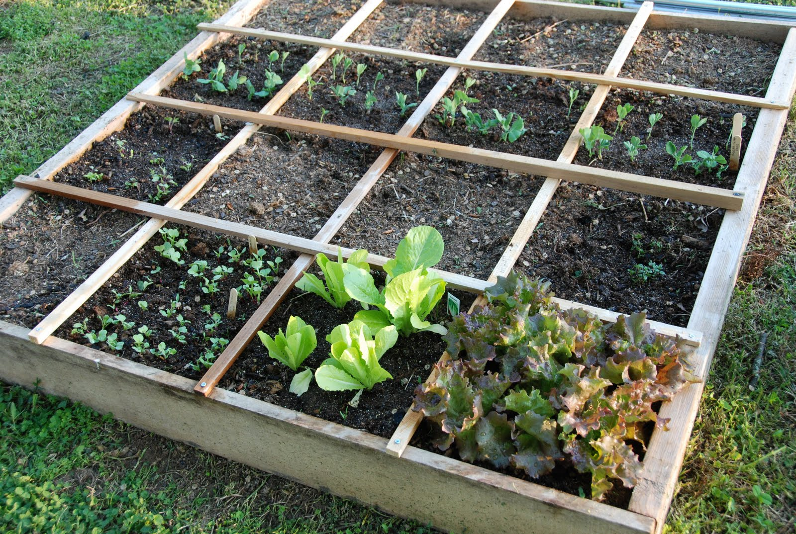 Square Foot Gardening Prepper Resourcescom The