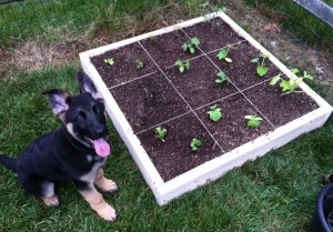 Square Foot Garden 3
