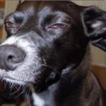 skeptical-dog